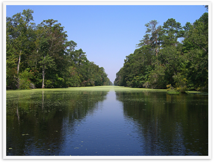 142 Great Dismal Swamp Canal